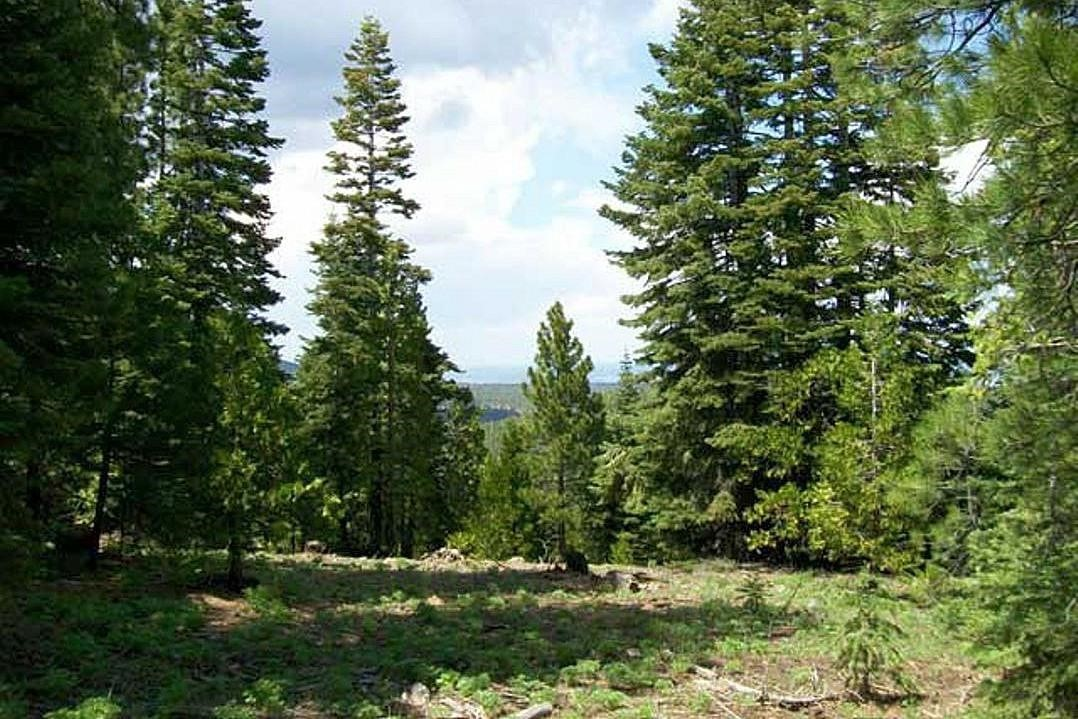 Northern California Land ± 1.00 Acre Forested Area MODOC