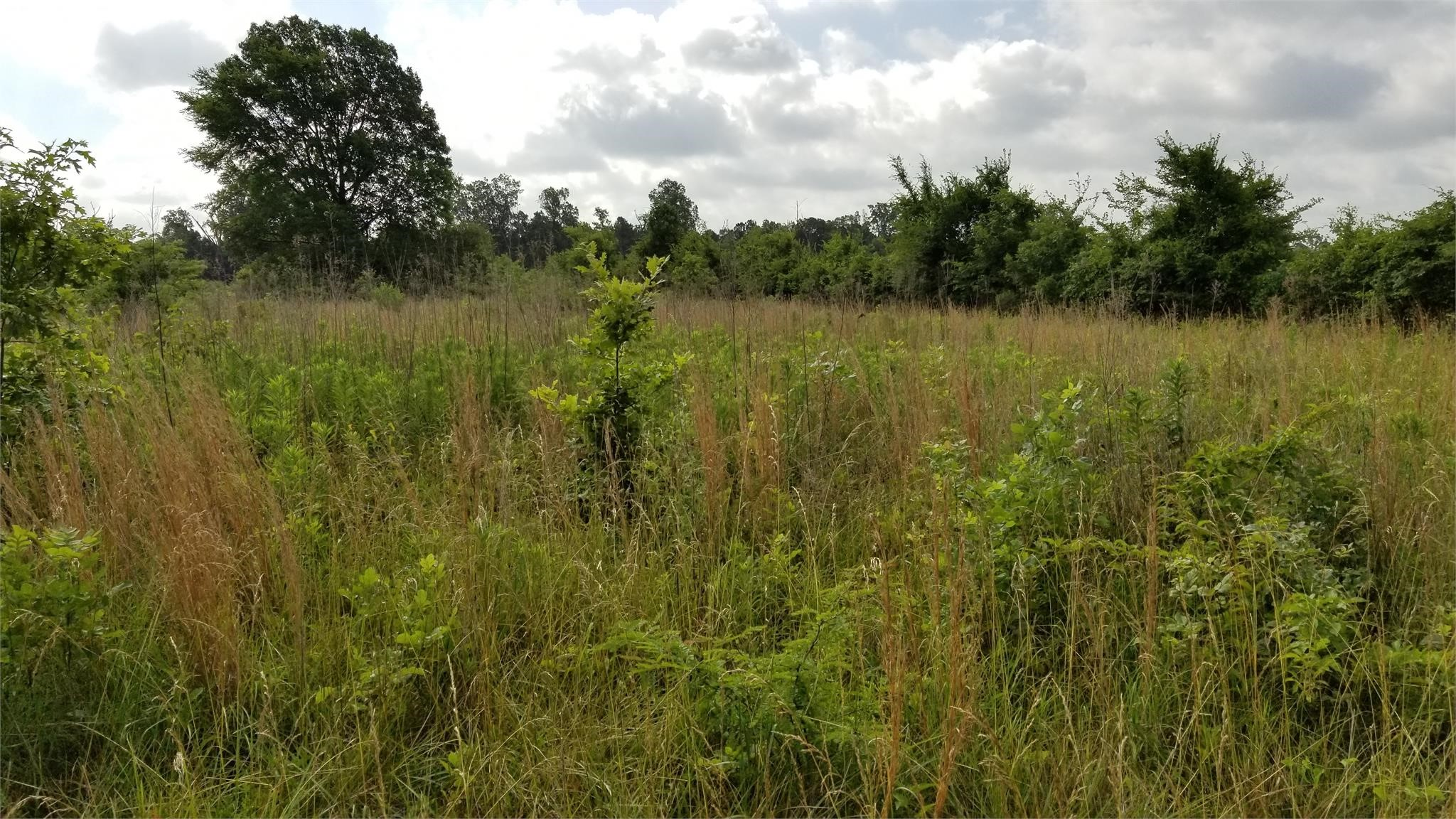 Hempstead County Arkansas Land Auction